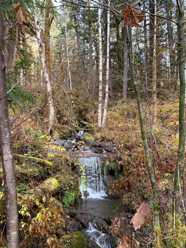 20191111_Dosewallips Road Trail_Karen Holtrop01