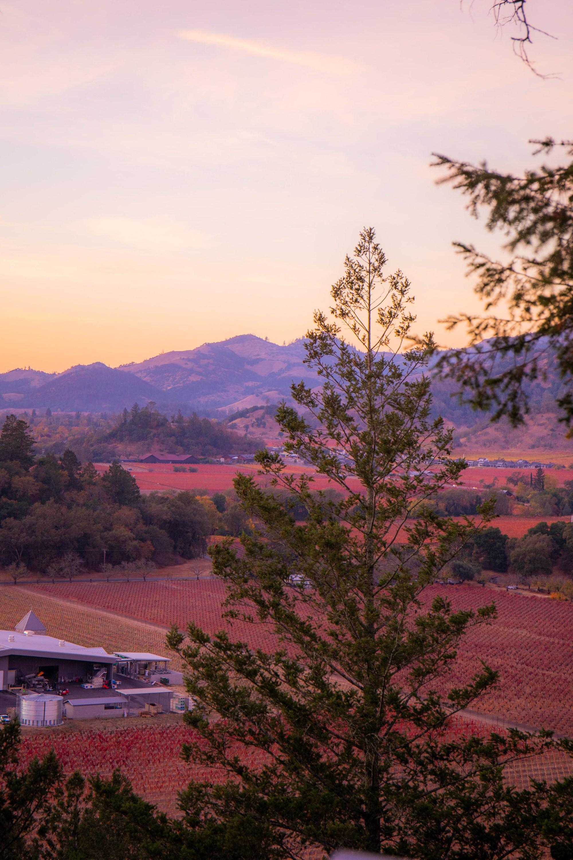 11.16. Napa Valley