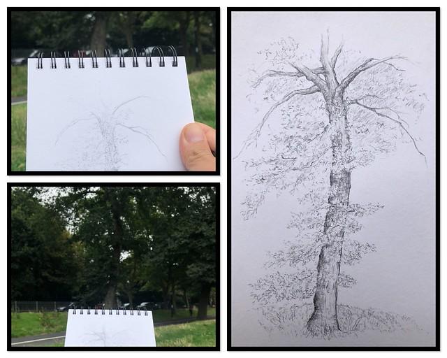 Trees of Brighton