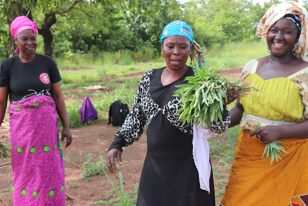 Happy women! Ongoing Napier grass and pigeon pea trials/demos in Duko Community,  northern Ghana is enabling farmers to get both food for their families and feed for their livestock. Photo credit: Wilhelmina Ofori-Duah/ITTA.