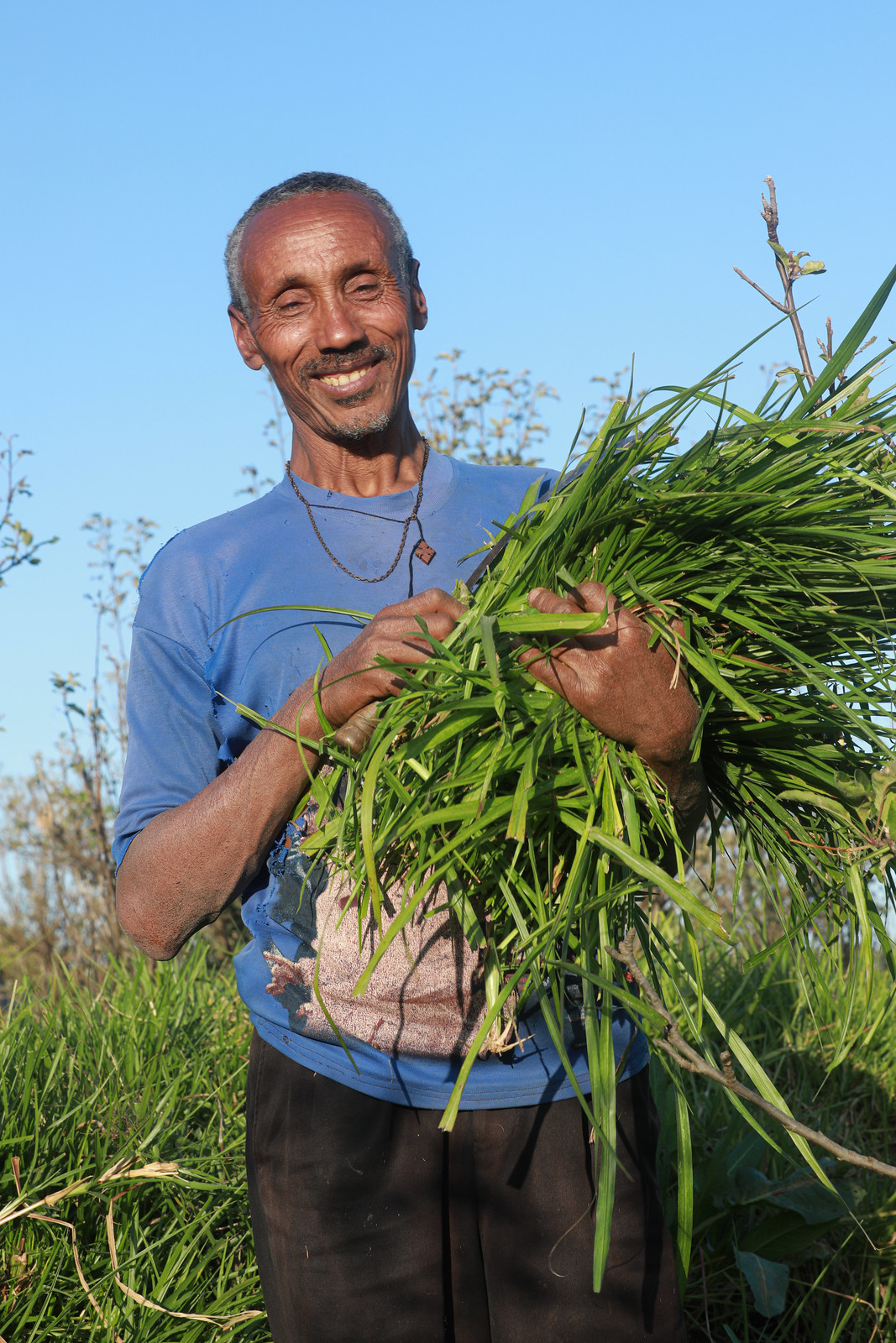 A farmer holding improved grass