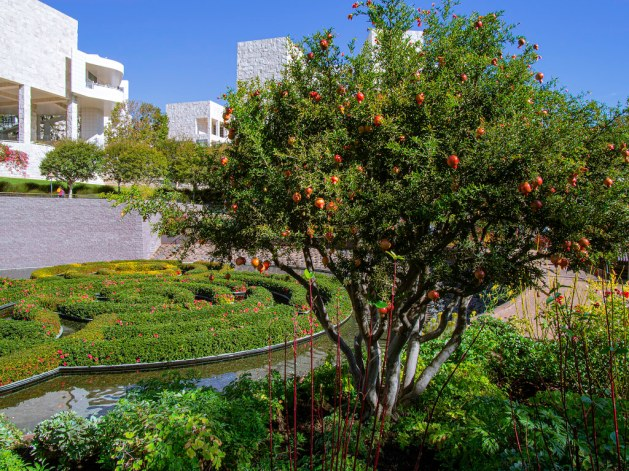 Pomegranate at Getty Center, Los Angeles
