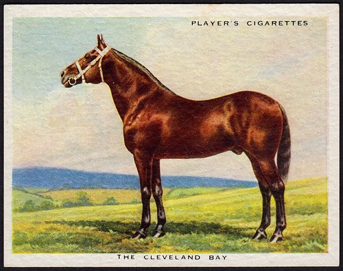 Cigarette Card - Cleveland Bay Horse