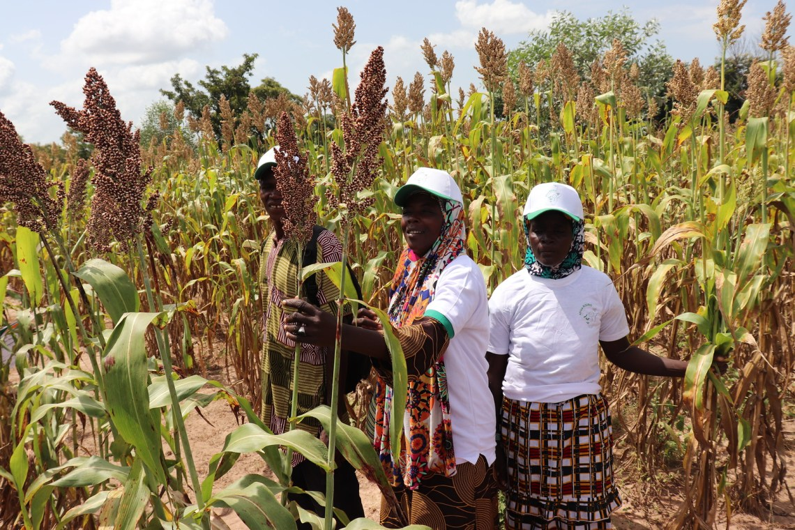 Some participants admire the grians of Tiéble sorghum variety at the Park at Bougouni. Photo credit - Wilhelmina Ofori Duah -IITA