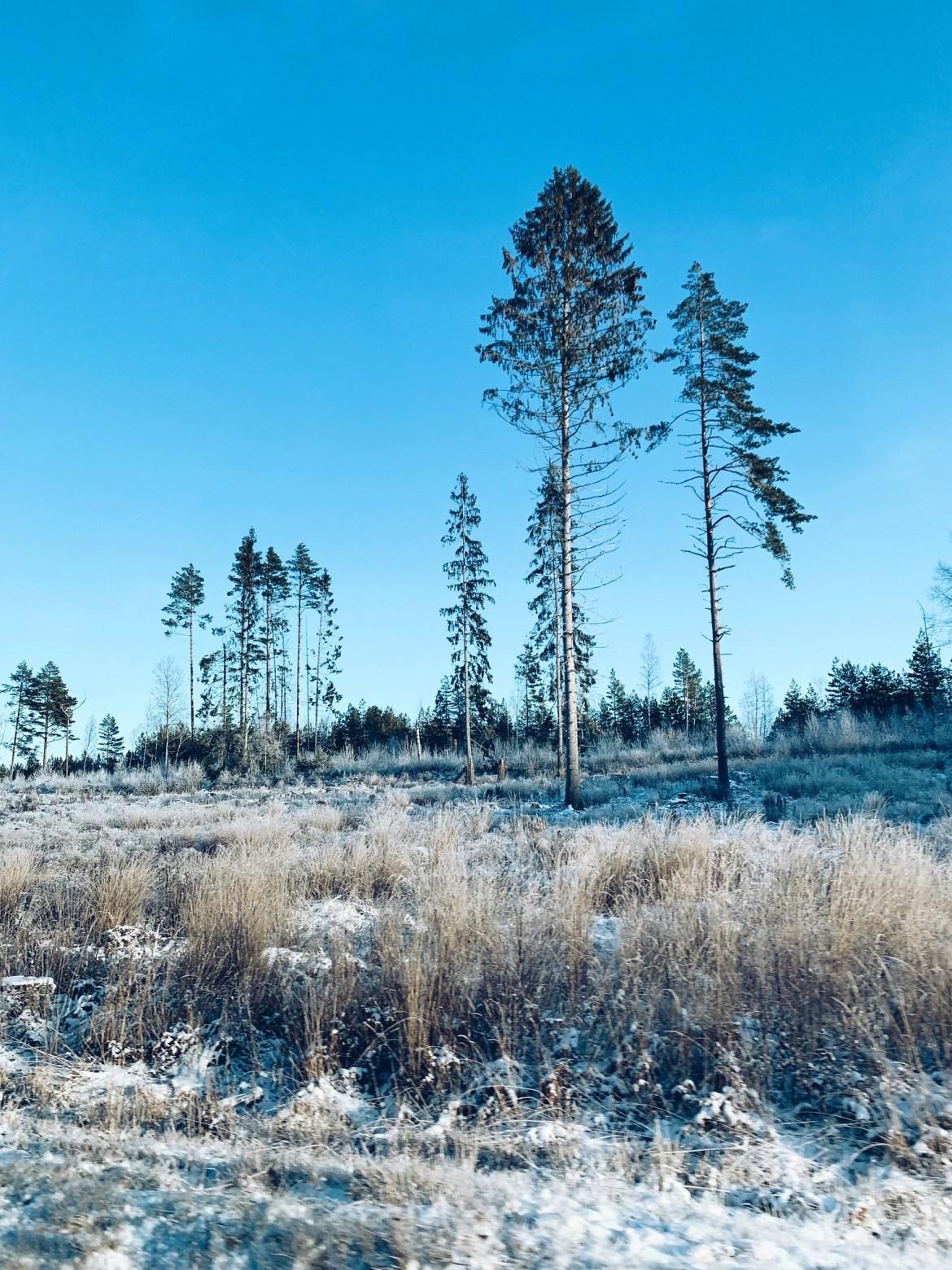 Vinterdag - reaktionista.se