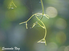 Tangled Tendrils