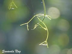 Tangled Tendrils