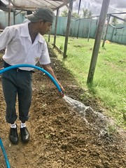 A student of Lower Corentyne Secondary watering one of the beds in his school's garden