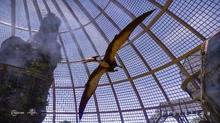 JWE_Screenshot_Pteranodon_01