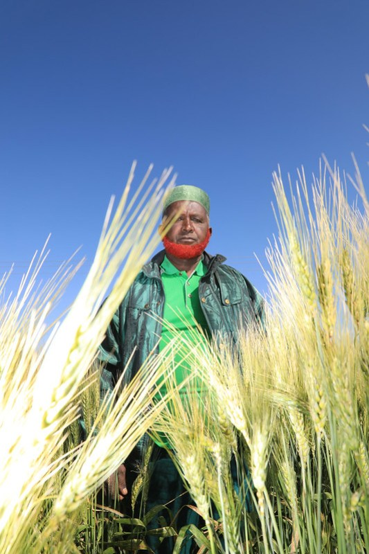 Haji nur Haji Adem in his wheat farm