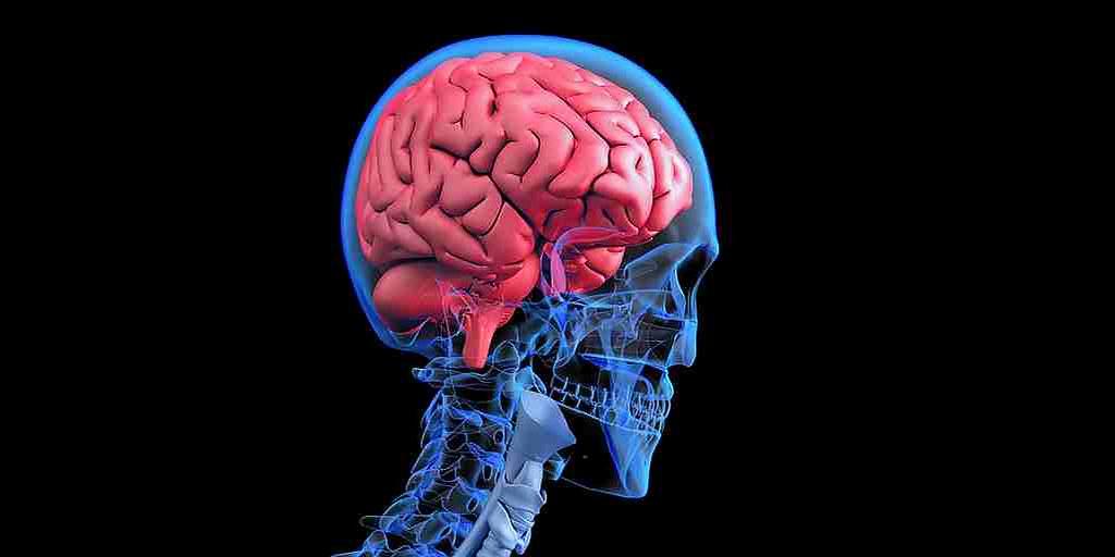 la-radiothérapie-affecte-le-cerveau-en-rendant-microglies-hyperactives