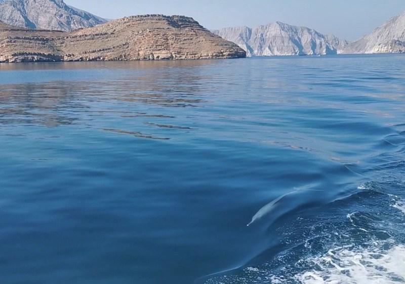 Oman delfiini