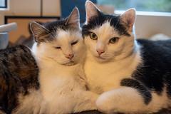 Fluffy & Ferdinand