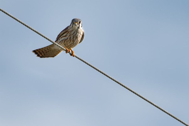 Bird on a wire 4