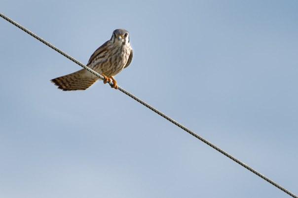 Bird on a wire 4