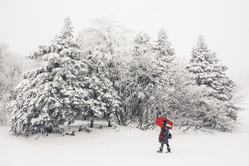 ▌日本 ▌仙台山形 Day3 藏王樹冰