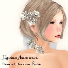 *NAMINOKE*Hypericum Androsaemum_SnowAD