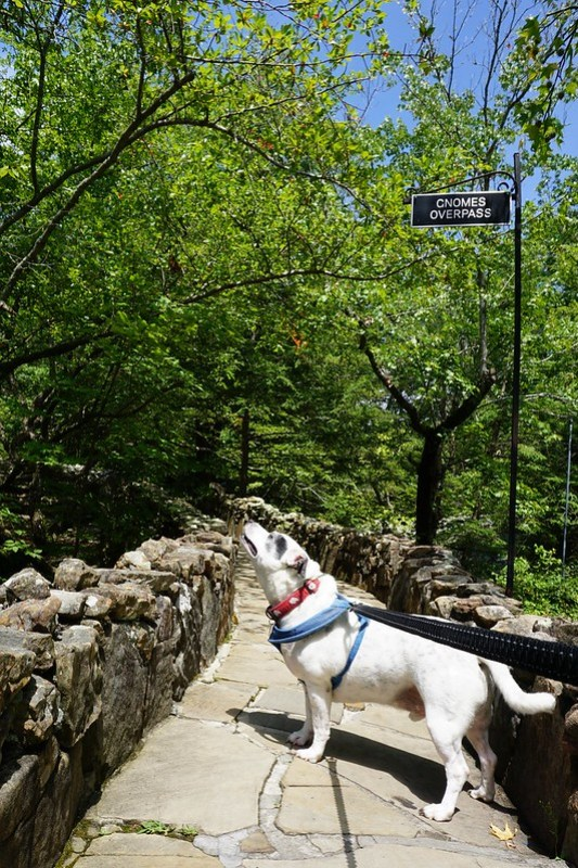 Road Trip with a Dog: Rock City, Lookout Mountain, Georgia, Aug. 2019