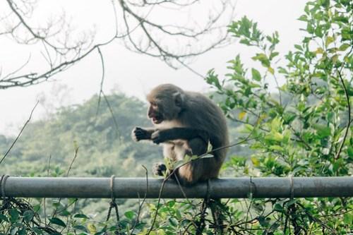 Monkey Mountain (Shoushan, Chaishan) 壽山, Kaohsiung, Taiwan