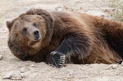 Sleeping Bear  uh-oh