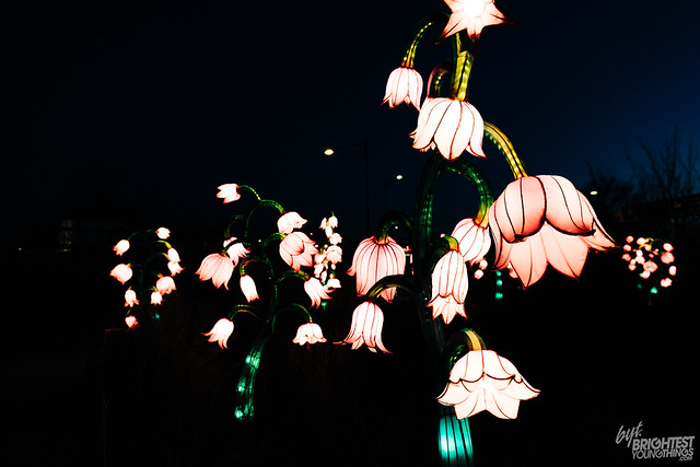 REACH Winter Lanterns