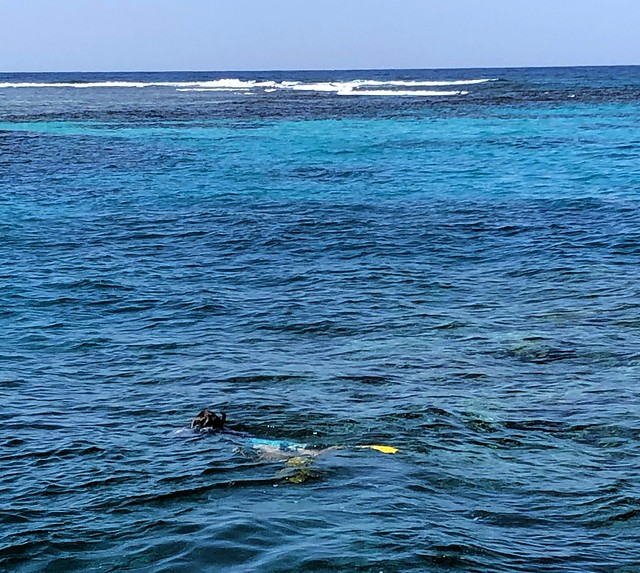 Disappointing snorkeling for sure; a half dead reef with no colorful coral by bryandkeith on flickr