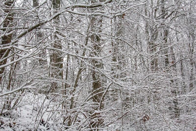 Snow Day2
