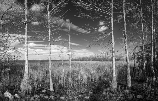 Loop Road 1, IR B&W