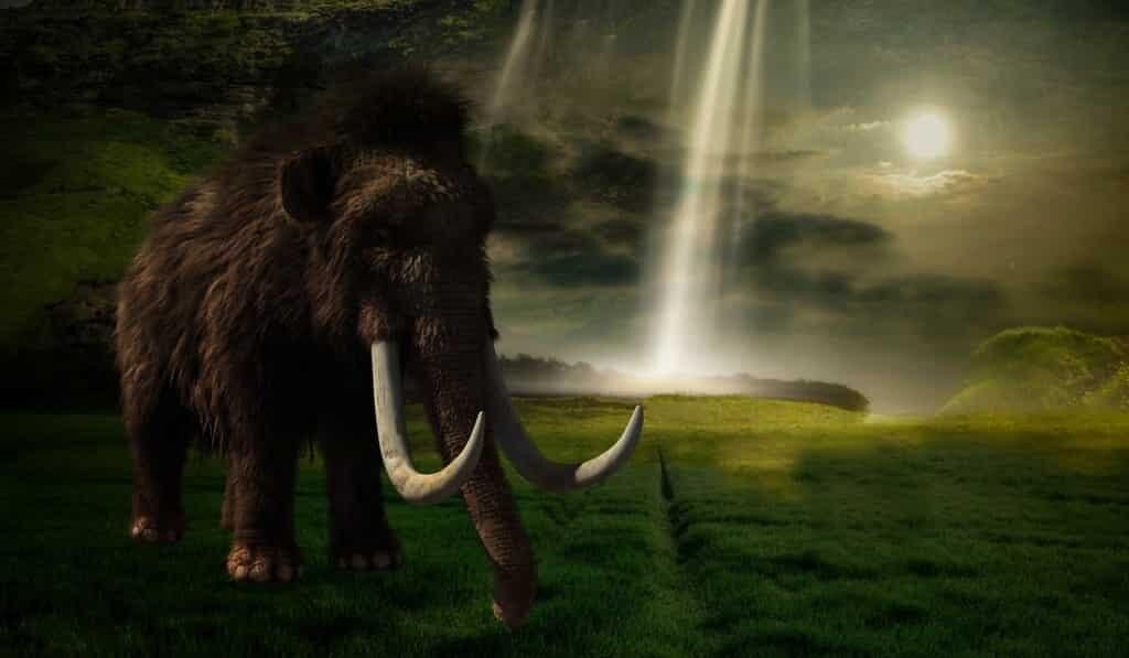 des-gènes-de-mammouths-illstrent-le-déclin-génétique