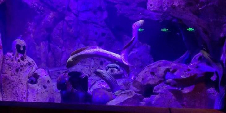 2019 CCA Investigation into Harbin Poseidon Ocean Kingdom
