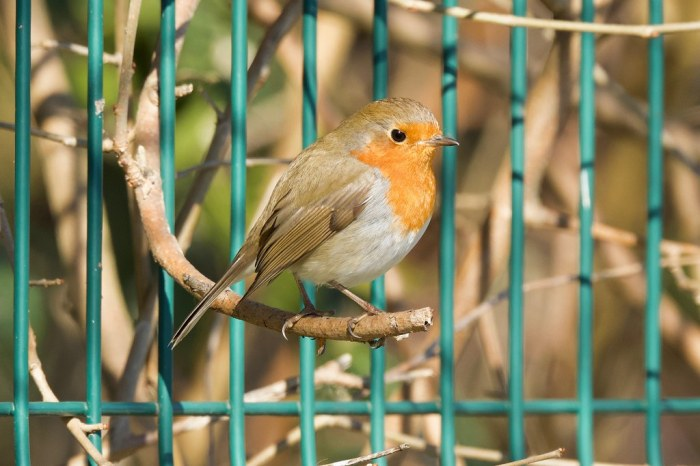 ROBIN ON TH RAILING