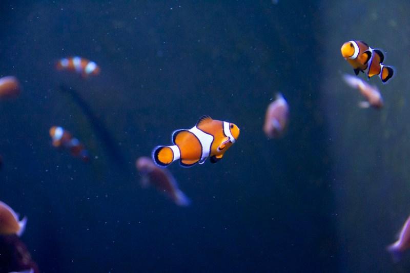Tennessee Aquarium81