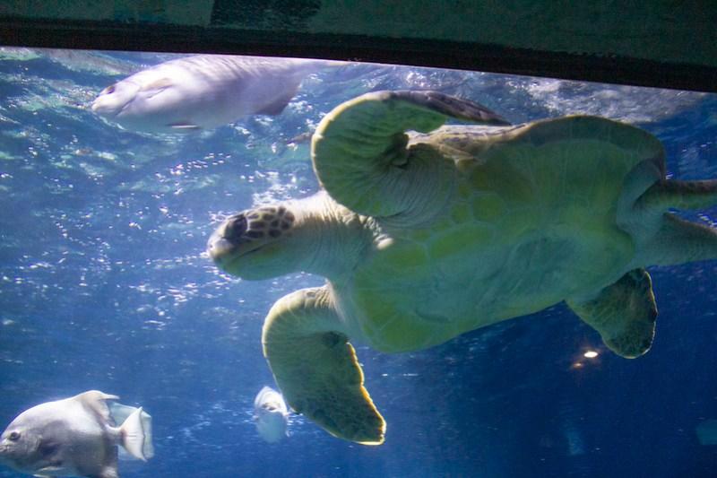 Tennessee Aquarium54