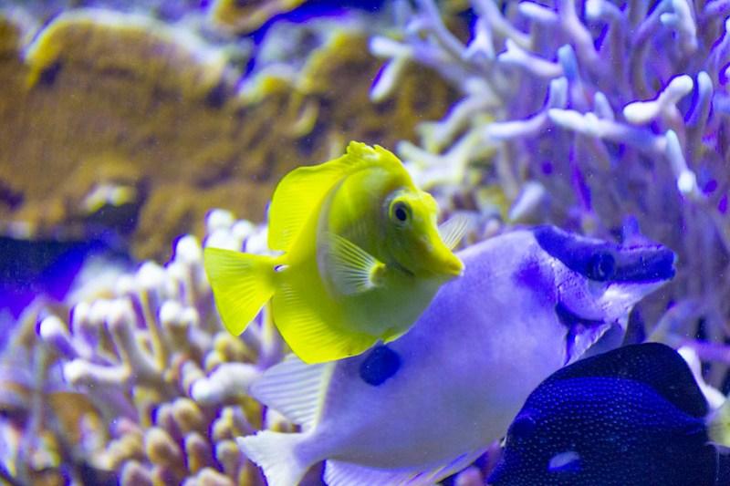 Tennessee Aquarium58