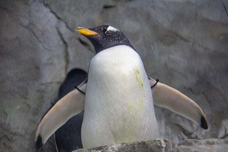 Tennessee Aquarium51