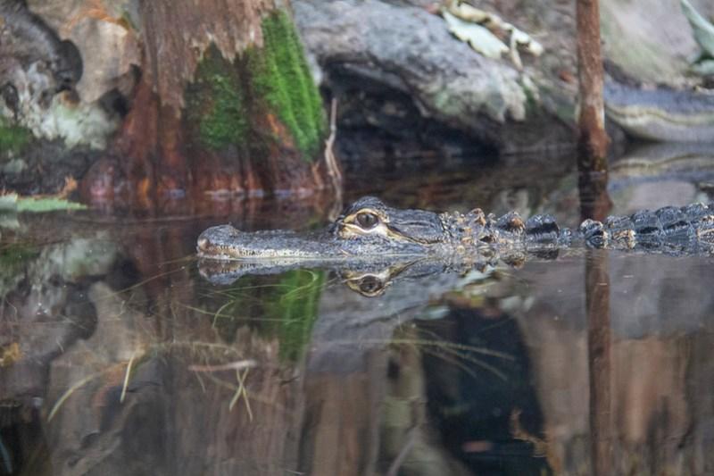Tennessee Aquarium24
