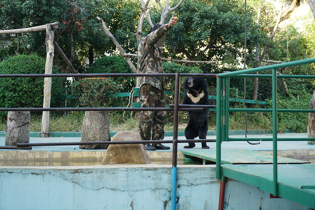 2017 CCA Investigation into Nanchang Zoo
