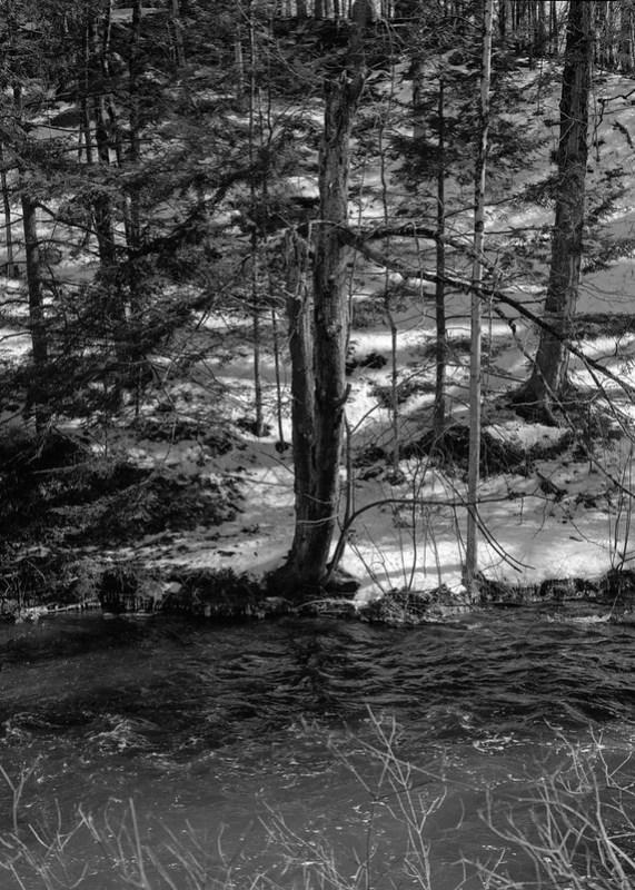 Tree, Geyser Creek