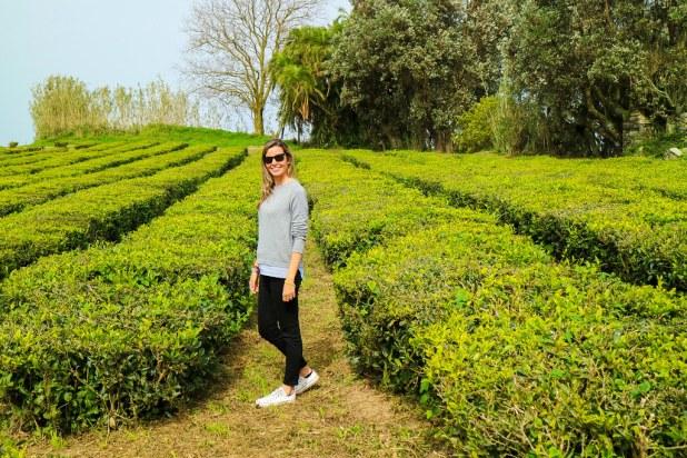 Plantaciones de té en São Miguel