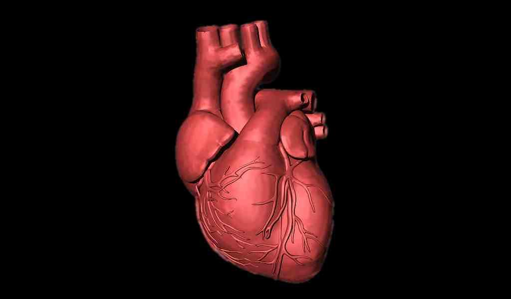 un-métabolite-produit-par-les-bactéries-intestinales-lié-aux-maladies-cardiovasculaires