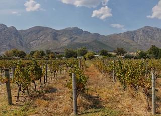 Vineyards, somewhere