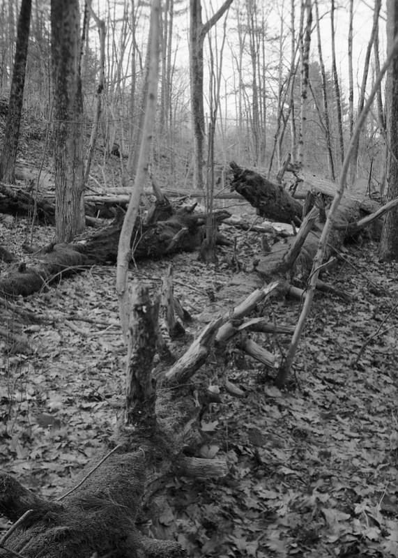 The Fallen, Saratoga Spa State Park.