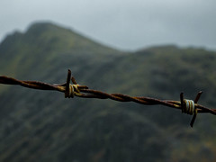 Dinorwic barbed wire