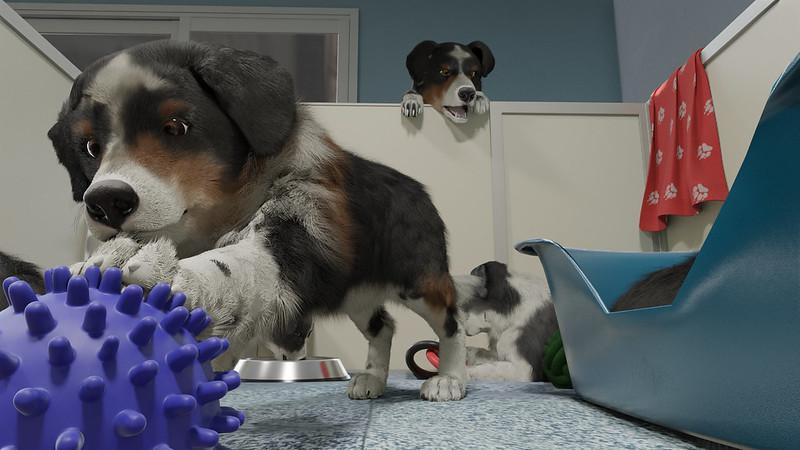Trenér psů - štěňata