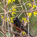The Towhee Hides
