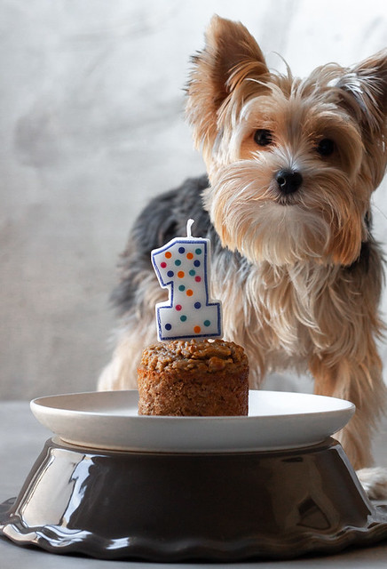 Pup Cake BLOG (4 of 5)