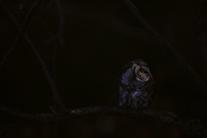 Moonlight Hunter