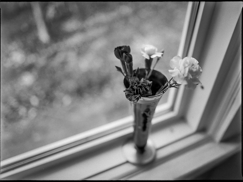 four blossoms, vase, window sill, Asheville, NC, Mamiya 645 Pro, Mamiya Sekor 45mm f-2.8, Kodak Tri-X 400, Moersch Eco film developer, late March 2020