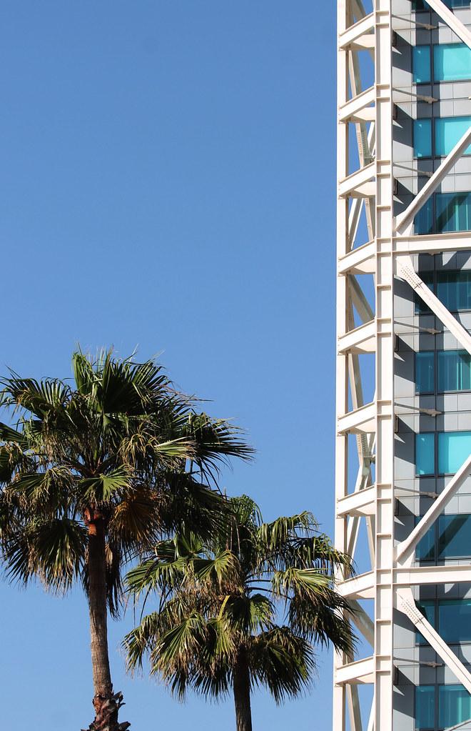 Les Arbres Ne Montent Pas Jusqu'au Ciel : arbres, montent, jusqu'au, Arbres, Montent, Jusqu'au, Ciel,, Immeubles, Si.…, Flickr