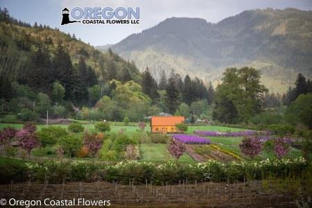 oregon coastal flowers-15